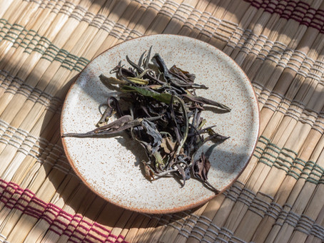 Why should you try our 2019 Spring Wild White Tea?