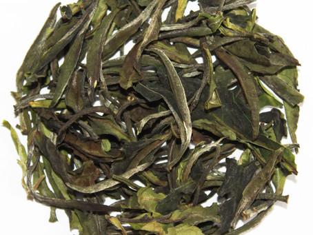 Introducing 2020 Spring Wild White Tea