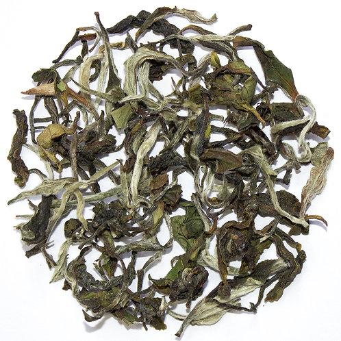 2020 Winter Darjeeling White Tea
