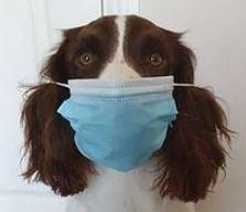 Hygieneregeln für den Hundeschulbetrieb