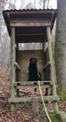 Wichtige Information der Jagd- und Forstaufsicht: Brut- und Setzzeit hat begonnen
