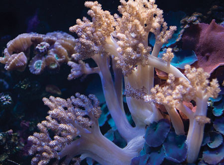 The Living Reef - NEW!