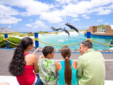 SeaLifeParkHawaii_Dolphinshow.jpg