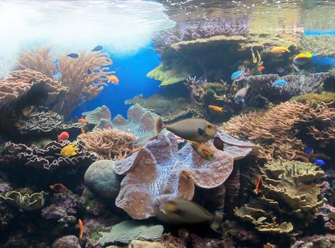 South Pacific Marine Communities