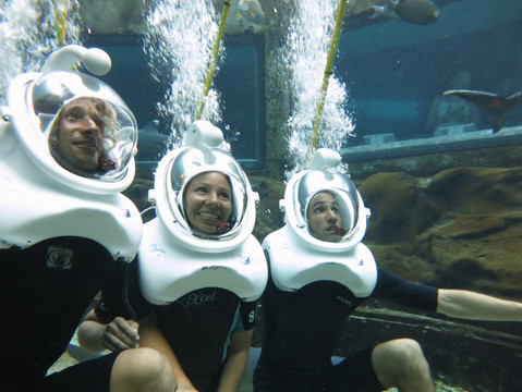 SeaLifePark_SharkDive.JPG