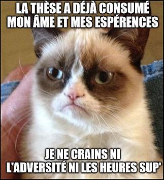 meme grumpy.JPG