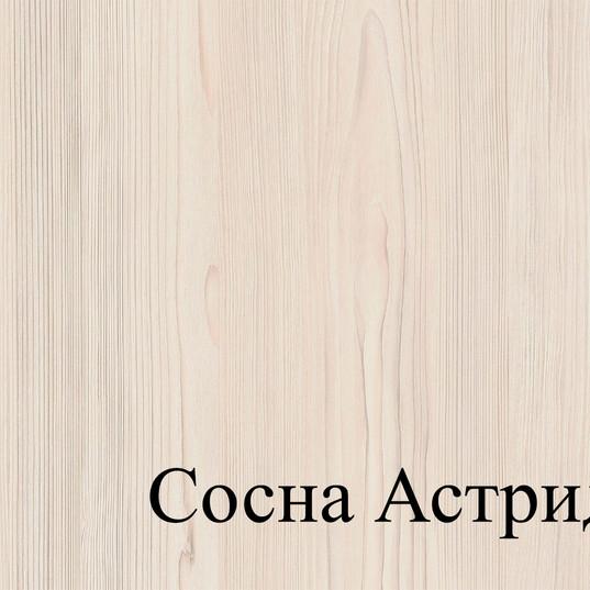 СОСНА АСТРИД.jpg