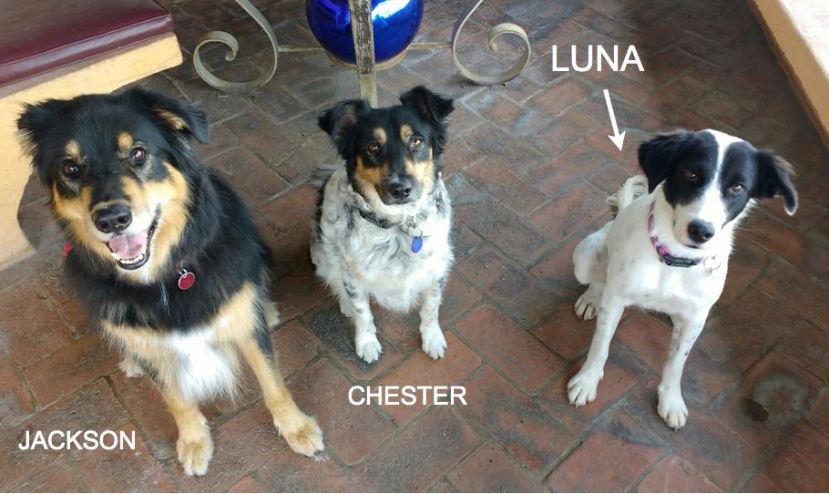 Our three doggies
