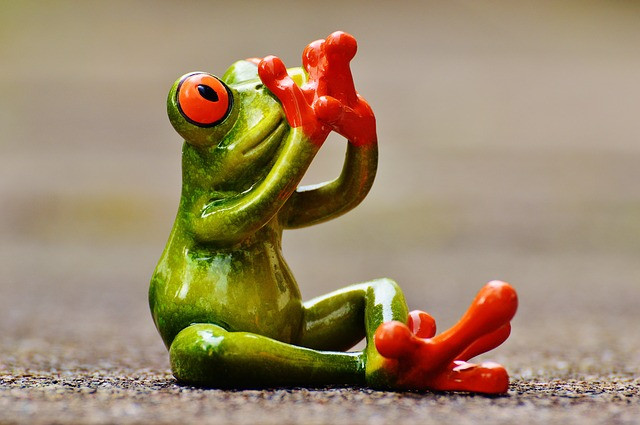frog-1274753_640