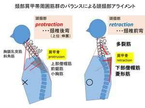 運動療法セミナー(頚椎編)首周りの骨や筋肉