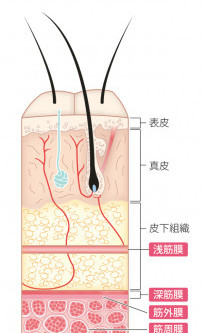 ピラティスで腰痛を治そう!腰痛のための運動療法セミナー(筋・筋膜編)