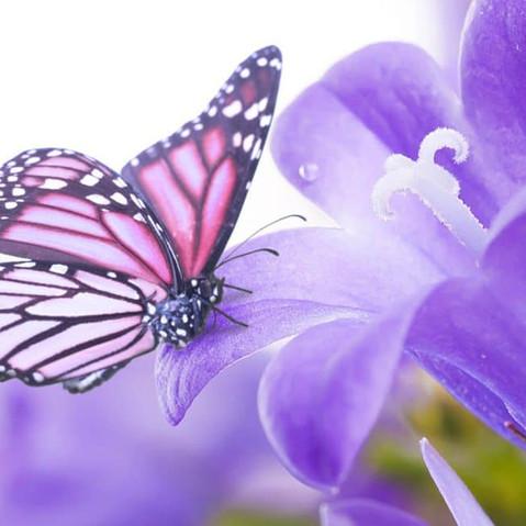 faixa-borboleta.jpg