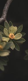 Flores 9.png