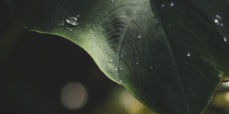 Folhas, Acervo Pessoal