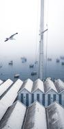 Gaivota e nevoeiro, acervo pessoal. Cascais, Portugal