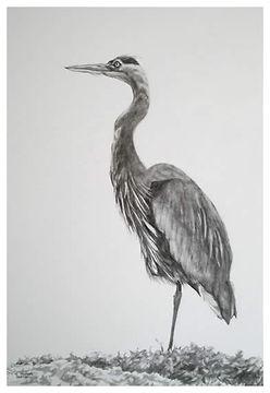 the_heron.jpg