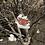 Thumbnail: Dřevěná brož motýl - Babočka paví oko