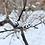 Thumbnail: Dřevěné náušnice sněhové vločky