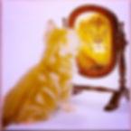 image001[1]_edited.jpg