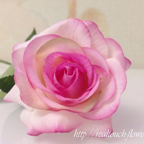 Роза розово-сиреневая