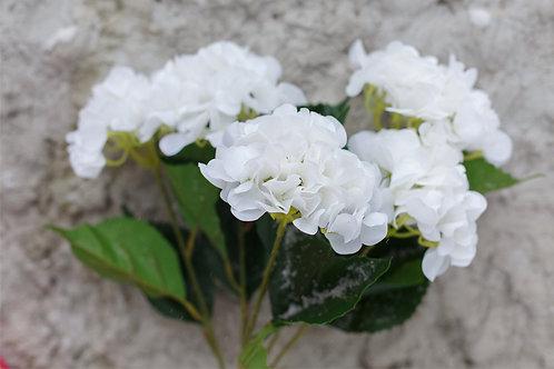 Гортензия кустовая 5 соцветий