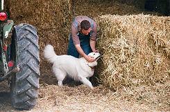 Ферма собак