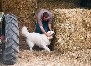 動物栄養学とは