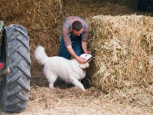 Good Stewardship for Bad Dog Owners