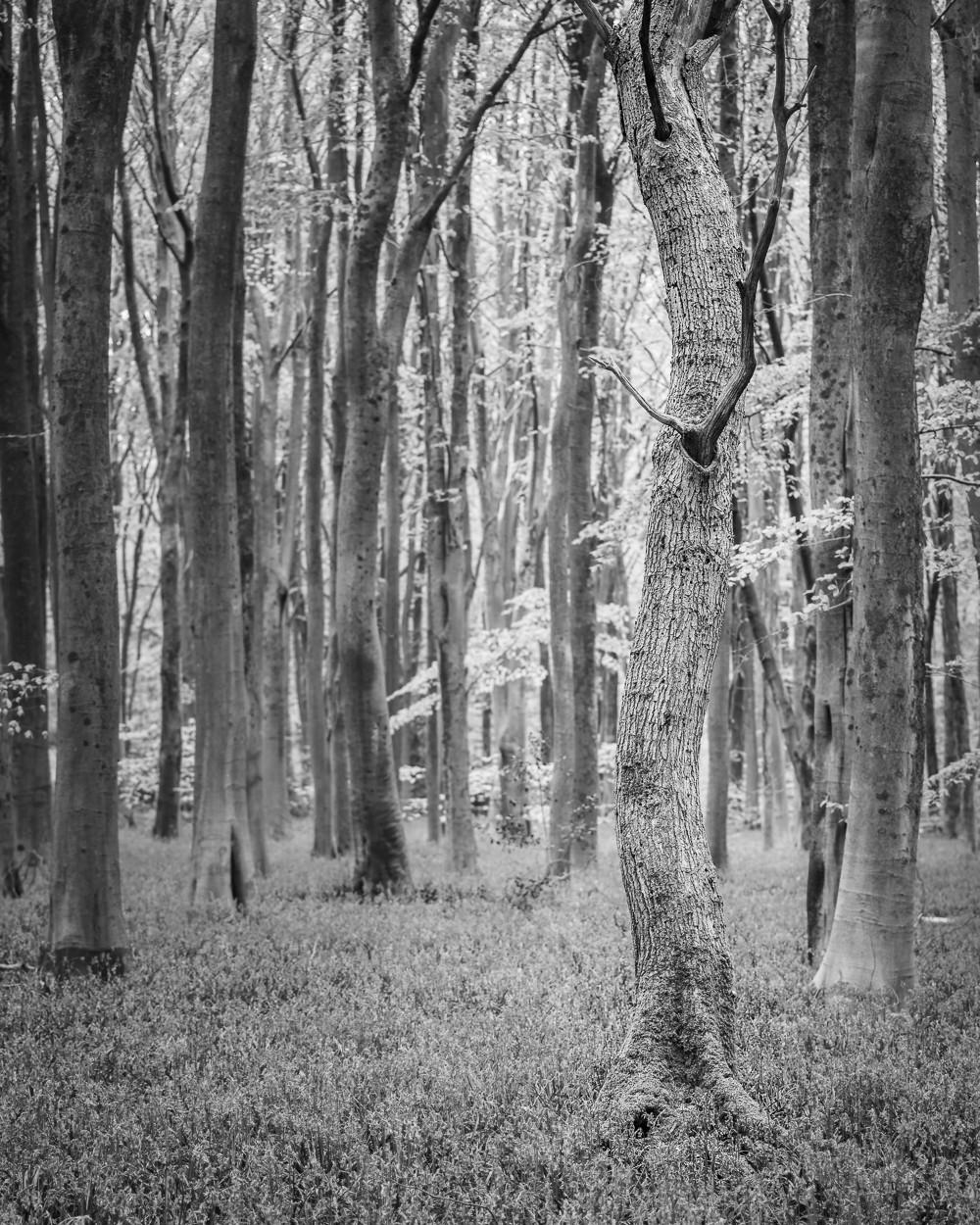 Black & white gnarled tree