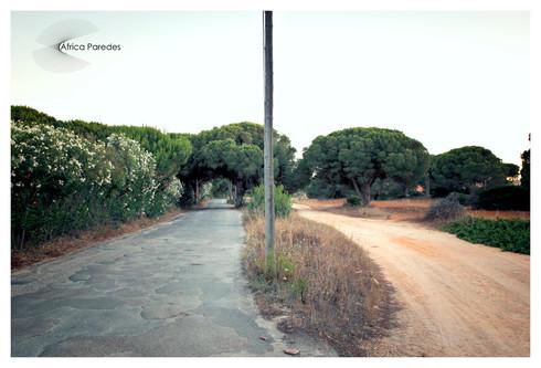 Cruce de caminos