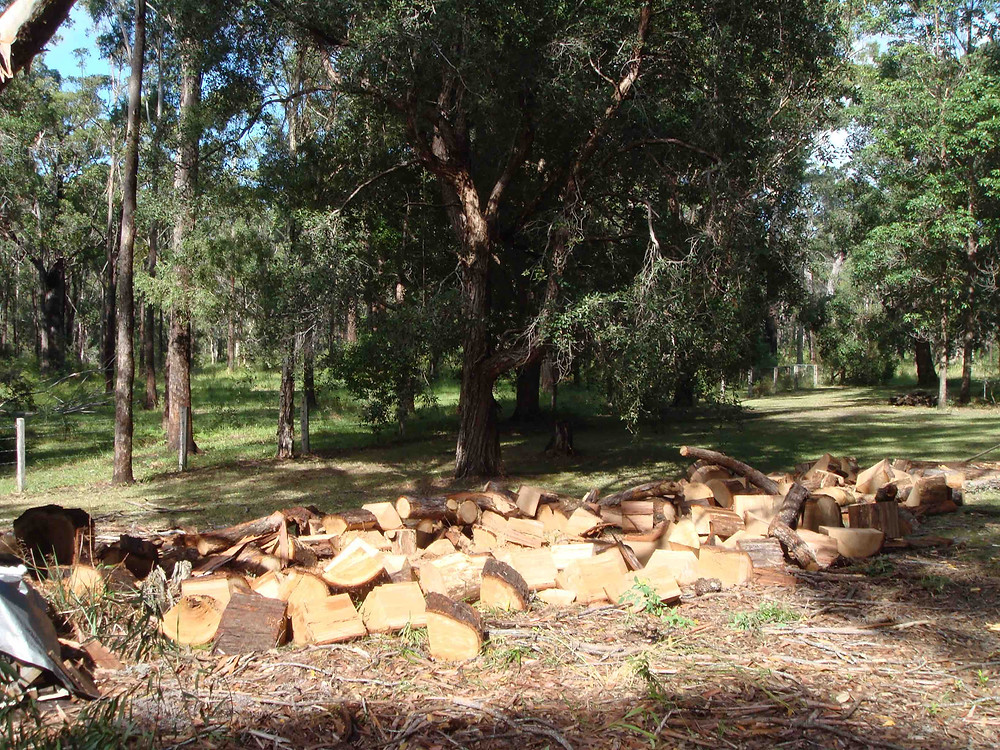 You can also use these tree stumps as firewood. We'll chop them up and pile them for you. All ready for use as firewood in winter! | Accomplished Tree Management
