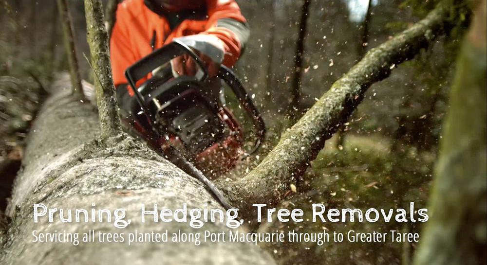 Accomplished Tree Management based in Port Macquarie provides all tree services including Pruning, Hedging and Tree Removals