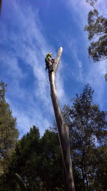 Our certified tree specialists can remove trees safely and efficiently