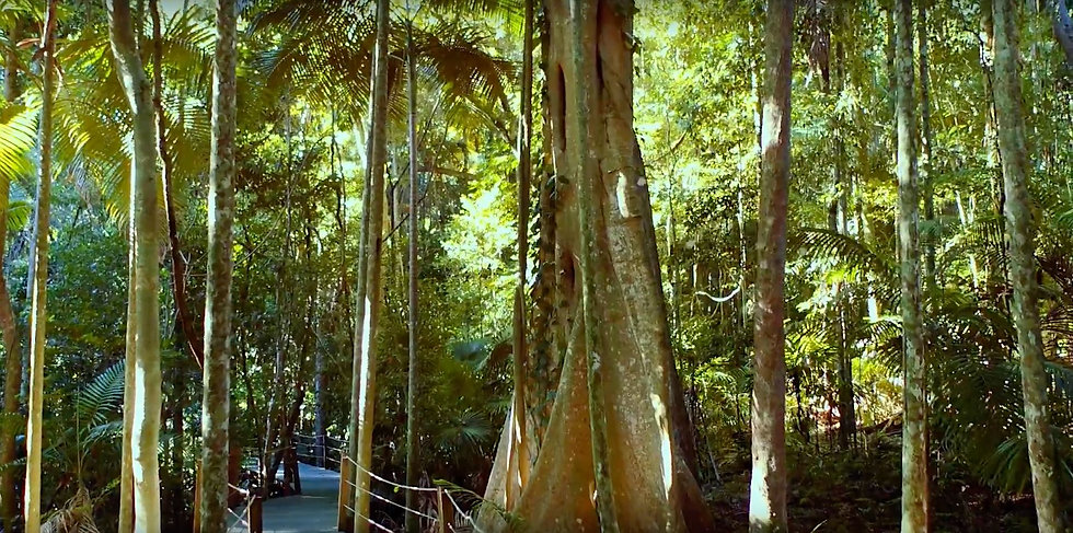 Accomplished Tree Management, Tree Removalist servicing Greater Port Macquarie