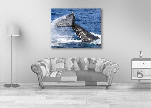 Whale Teasing Tale