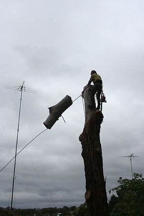 Certified tree specialists from Accomplished Tree Management servicing Port Macquarie, Wauchope, Laurieton, Kempsey and Taree