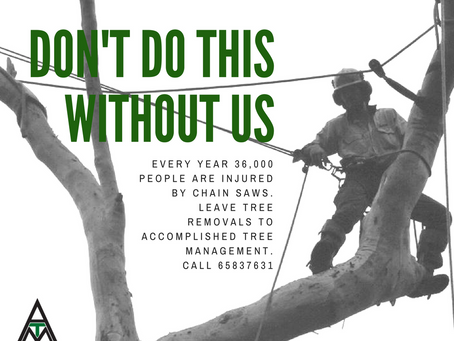 Arborists: Unsung Heroes of Tree Removal