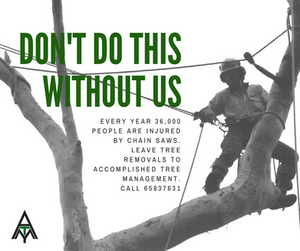 Remove trees safely. Calla professional arborist like Accomplished Tree Management. Call 0411443535
