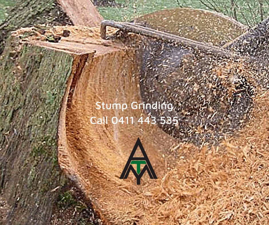 For all stump grinding services in Port Macquarie, Wauchope, Kempsey, Laurieton through to Taree, call Accomplished Tree Management