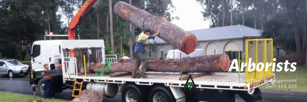 Accomplished Tree Management is a professional and qualified arborist who is fully insured