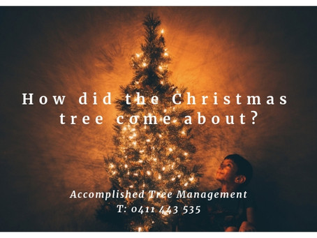 How did the Christmas Tree come about?