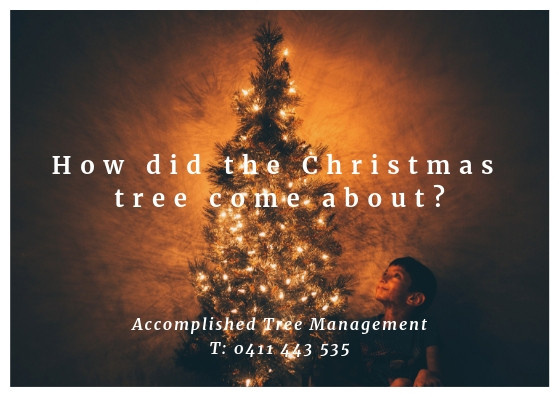 How did the Christmas tree come about? How Christmas trees started? Christmas tree answers from Accomplished Tree Management