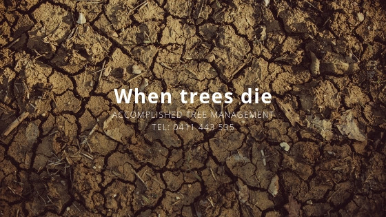 When trees die during a drought or dry season | Accomplished Tree Management | Tel: 0411 443 535