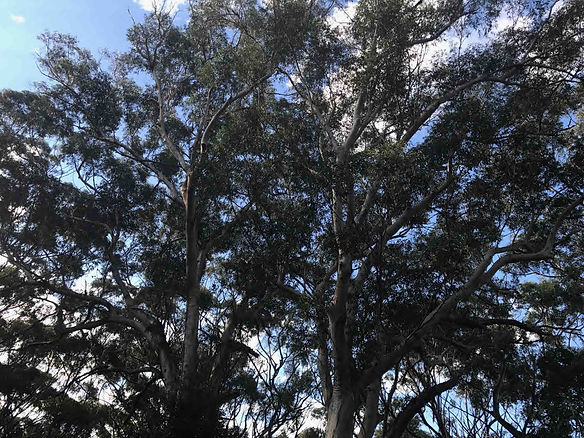 Accomplished Tree Services provides all tree removal services from Port Macquarie through to Greater Taree