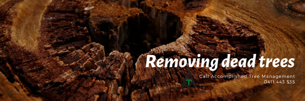 Call Accomplished Tree Management to remove dead trees