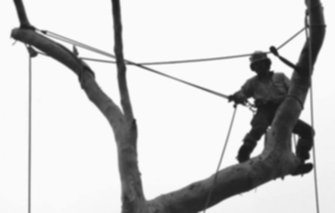 Tree lopping services from Accomplished Tree Management servicing Port Macquarie, Wauchope, Laurieton, Kempsey and Taree