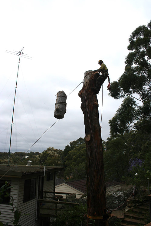 Contact Accomplished Tree Management for Tree Removals