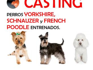 CASTING Perros Entrenados