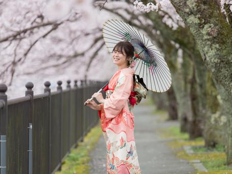 「桜ロケ」