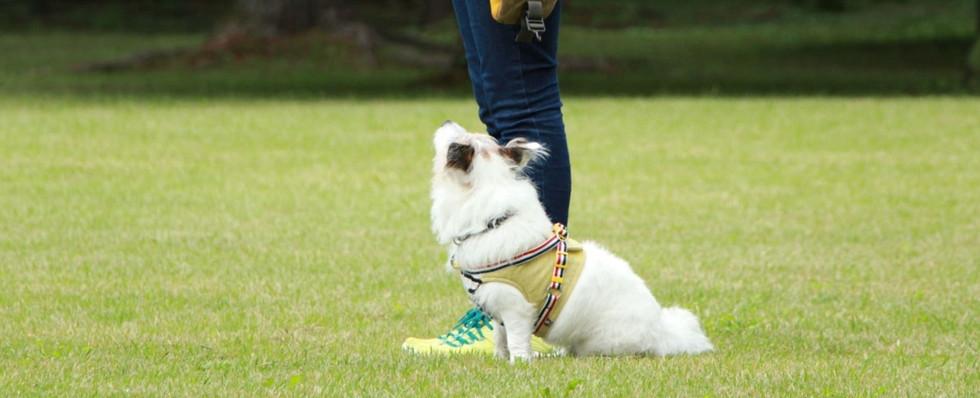 Heel-position command training